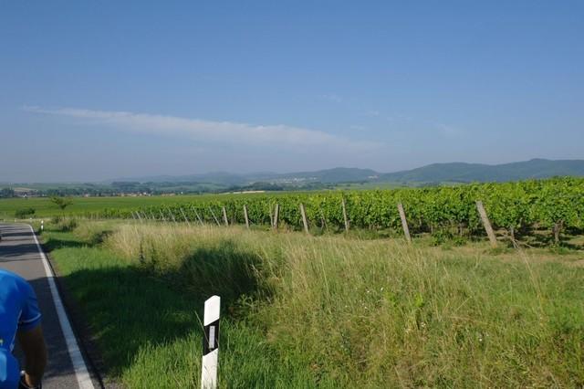 Saisonstart in der Pfalz (Rhodt) - vom  21. bis 23. April 2017